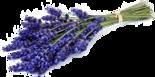Lavendel-olie