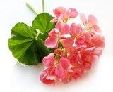 Puur Natuurlijke Body lotion_