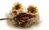 Hooibloem olie (Helichrysum) _