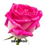 Puur Natuurlijke shampoo _