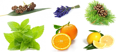 Cadeaupakket Klassiek citrus(6)