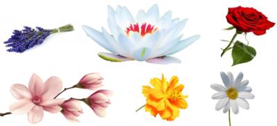Cadeaupakket Klassiek bloemen (6)