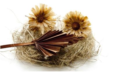 Hooibloem olie (Helichrysum)