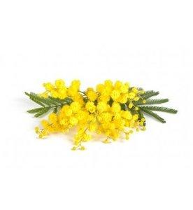 Mimosa olie