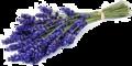 Lavendel-olie-30ml